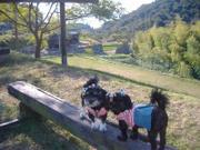 20071103dscf9333dogrun