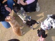 20071104dscf9477dogrun