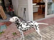 20100918_cimg2564_dogart