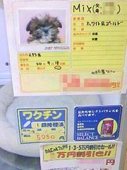 20081109__160301_小梅出会