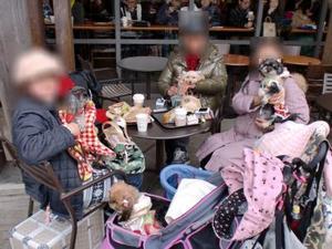 20110101_cimg3790_cafe