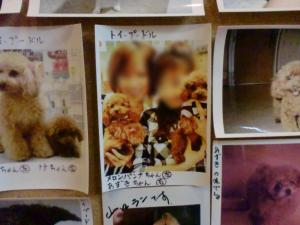 20121109_cimg9720_